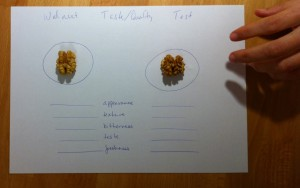 Walnuts: Germany vs. France